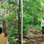 Зачем нам нужен лес