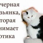 Тень: всё, что Вы о себе не знаете и пока что боитесь спросить, Москва, 13 декабря 2015