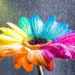 Запрос – это только цветочки…